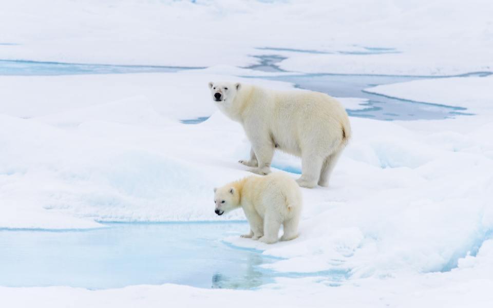 Explore arctic